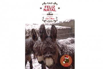 Cartaz natal 2013 tomelo